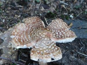 cool fungus
