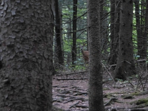 hey, mama deer!